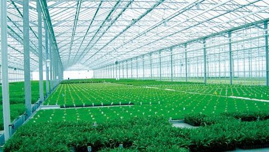 北方温室大棚采用欣海阳光板的优势