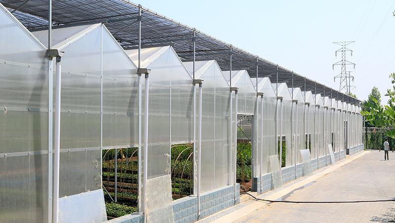 阳光板温室大棚类型